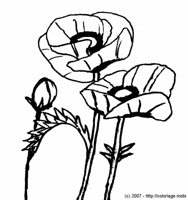 Free coloring and drawings Poppy Adult Coloring page