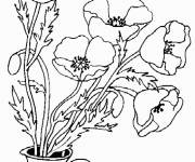Free coloring and drawings Poppy and Butterfly Coloring page