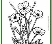 Coloring pages Poppy and Nature