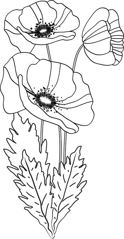 Free coloring and drawings Poppy Flower Coloring page