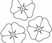 Coloring pages Poppy flowers
