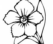 Coloring pages Poppy flowery superb