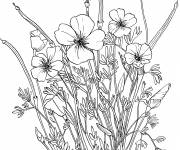 Free coloring and drawings Poppy for children Coloring page