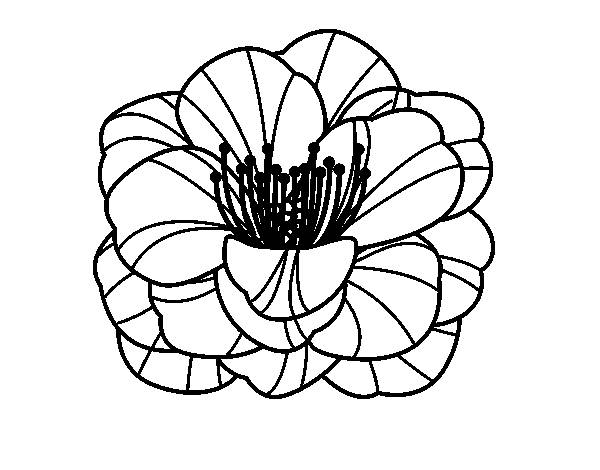 Free coloring and drawings Poppy in black Coloring page
