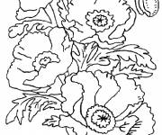 Free coloring and drawings Poppy in Spring Coloring page