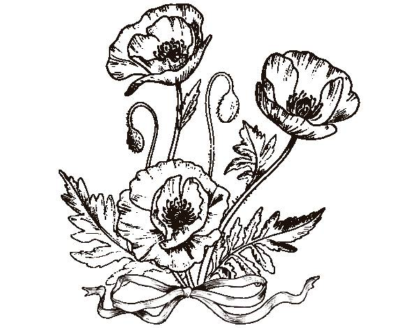 Free coloring and drawings Poppy in stylized pencil Coloring page