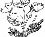 Coloring pages Poppy in the garden