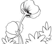 Coloring pages Poppy outdoors