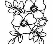 Coloring pages Poppy to decorate