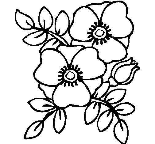 Free coloring and drawings Poppy to decorate Coloring page
