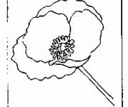 Free coloring and drawings Single poppy Coloring page