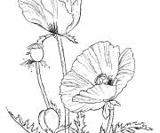 Coloring pages Stylized Poppies to print