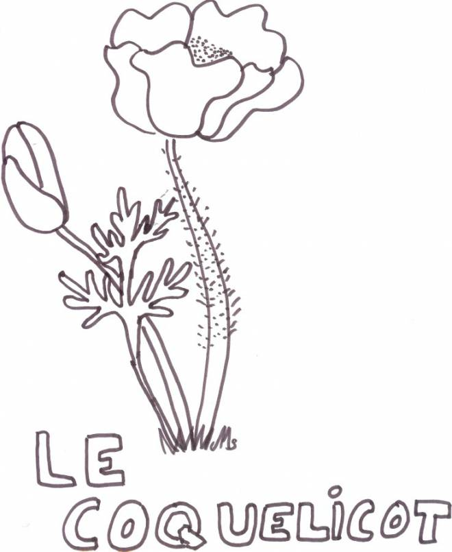 Free coloring and drawings The Poppy in blue Coloring page