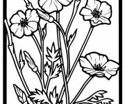 Coloring pages Vector poppies in frame