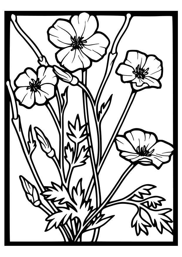 Free coloring and drawings Vector poppies in frame Coloring page