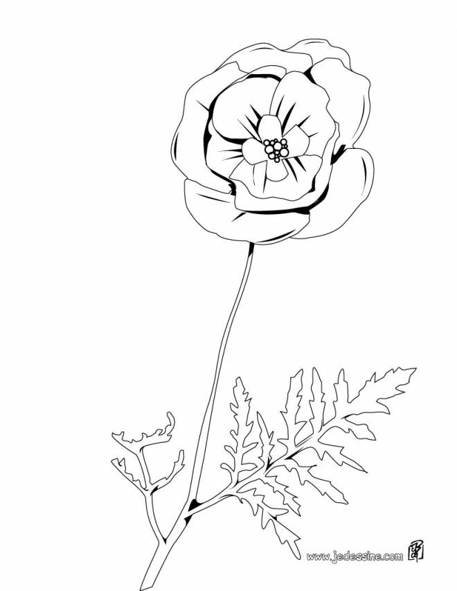 Free coloring and drawings Vector poppy Coloring page