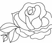 Coloring pages Beautiful rose