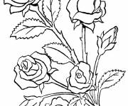 Coloring pages Colorful flowers