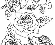 Coloring pages Easy Roses