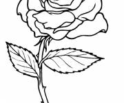 Coloring pages Pink for child