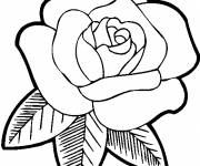 Coloring pages Pink for mom