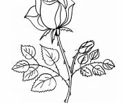 Coloring pages Pink in color