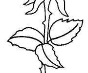 Coloring pages Rose to download