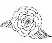 Coloring pages Roses front view