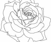 Coloring pages Stylized roses