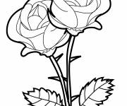 Coloring pages Vector roses