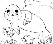 Coloring pages Seal in the sea