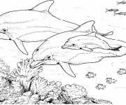 Coloring pages Marine Animals in Pencil