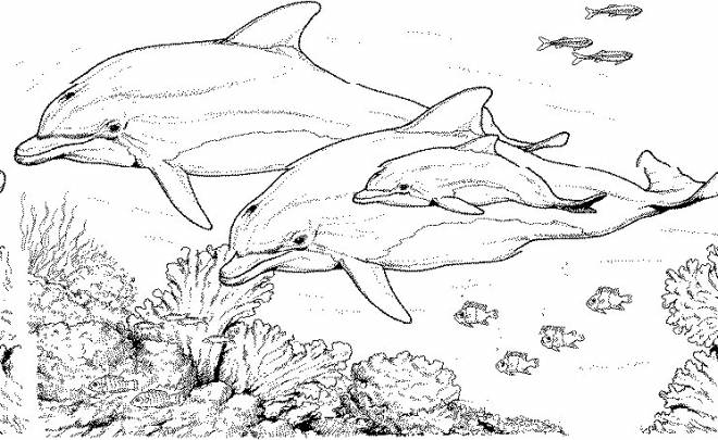 Free coloring and drawings Marine Animals in Pencil Coloring page