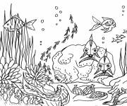 Coloring pages Sea Life