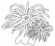 Coloring pages Seaweed