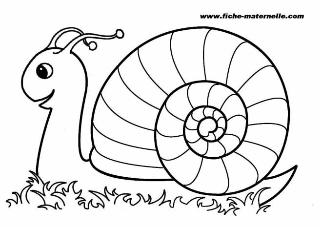 Free coloring and drawings Color snail Coloring page