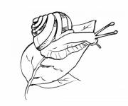Coloring pages Realistic snail on tree leaf
