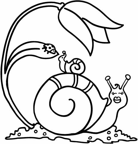 Free coloring and drawings Snail and Ladybug Coloring page