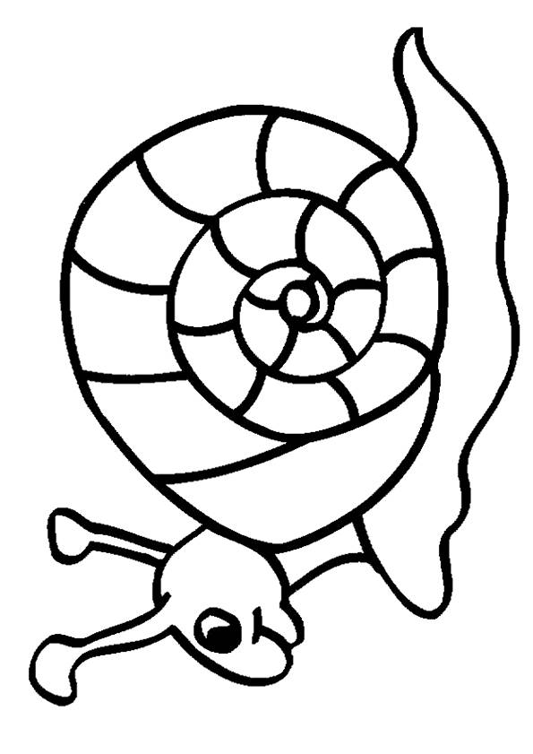 Free coloring and drawings Snail for child Coloring page