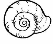 Free coloring and drawings Snail shell Coloring page