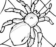 Coloring pages Adult spider