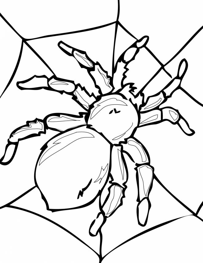 Free coloring and drawings Adult spider Coloring page