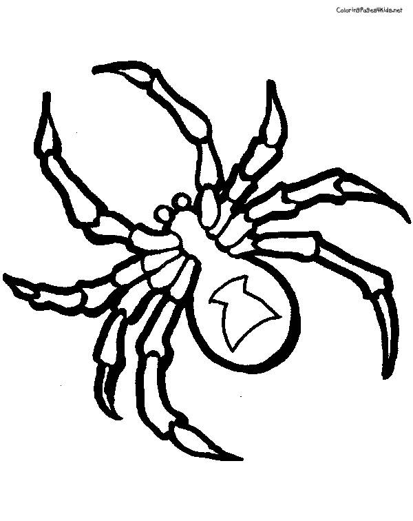Free coloring and drawings Black and white spider Coloring page