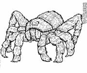Coloring pages Dangerous insect spider