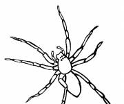 Free coloring and drawings Easy spider Coloring page
