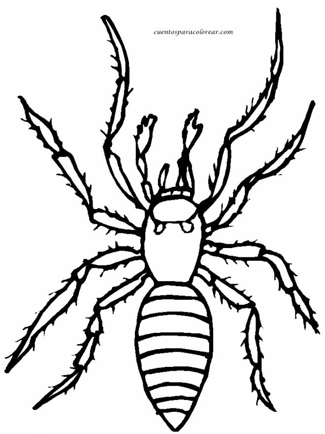 Free coloring and drawings House spider Coloring page