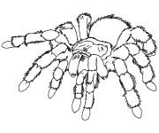 Coloring pages Scary spider