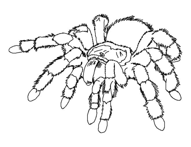 Free coloring and drawings Scary spider Coloring page