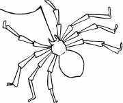 Free coloring and drawings Spider and its wire to decorate Coloring page