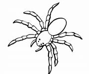 Coloring pages Spider crab